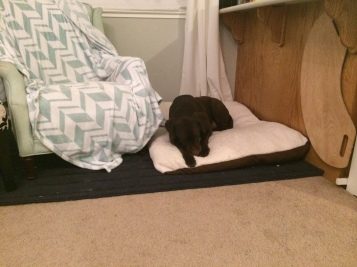 jackson on bed